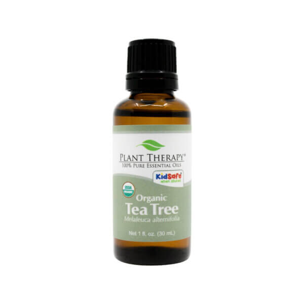 Organic tea tree essential plant therapy the healthy place apple wellness