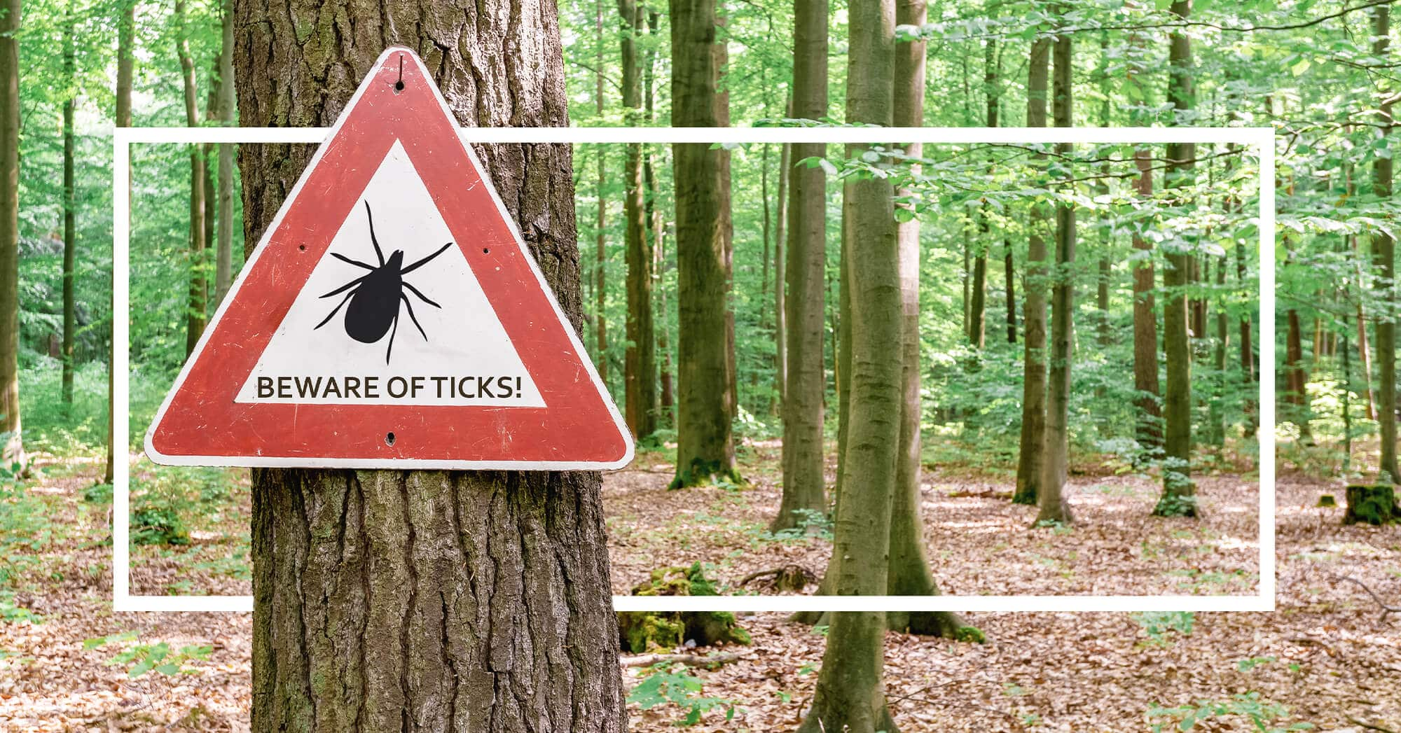 Dangers of tick bites Wisconsin are tick bites dangerous Madison wi the healthy place